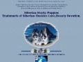 A-1 Siberian Huskies