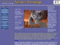 Barney the British Shorthair Kitten