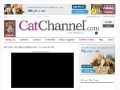 Cat Channel: Kittens