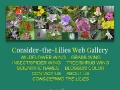 Consider-the-Lilies Web Gallery